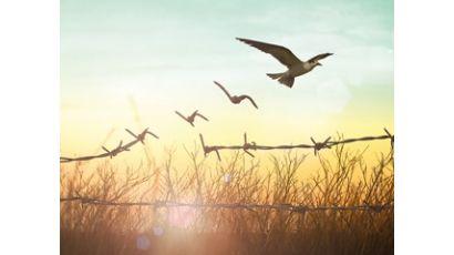 ΜΕΤΑΝΑΣΤΕΥΣΗ ΚΑΙ ΠΡΟΣΦΥΓΙΚΕΣ ΡΟΕΣ ΥΠΟ ΤΟ ΔΙΕΘΝΕΣ ΚΑΙ ΕΥΡΩΠΑΪΚΟ ΔΙΚΑΙΟ – Η ΠΡΑΚΤΙΚΗ ΤΗΣ ΕΝΣΩΜΑΤΩΣΗΣ